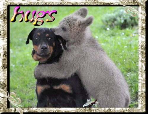 ~WT~-bear-hugs-dog