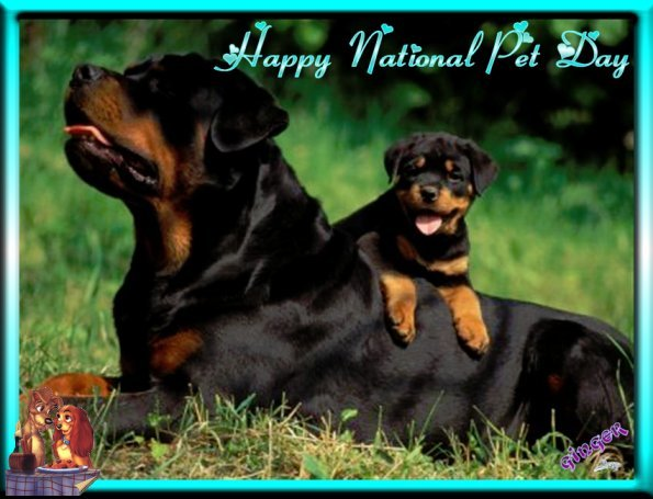 ~WT~NATIONAL PET DAY