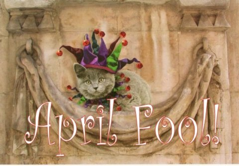 april fools day jester cat