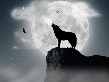 wolf howling at the moon