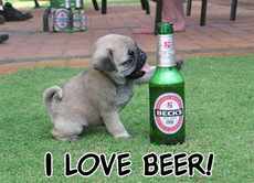Puppy dog loves beer
