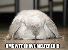 bunny rabbit melted