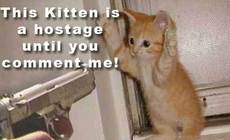 the kitten is hostage until you comment me