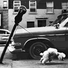 poodle bends parking meter