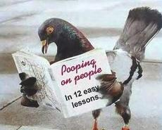 pigeon pooping on people book