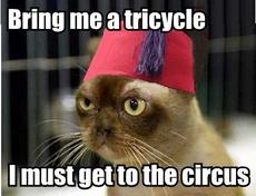 bring me a tricycle i must get to the circuis