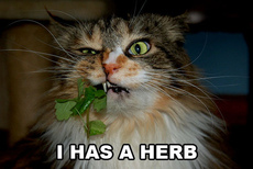 i have an herb