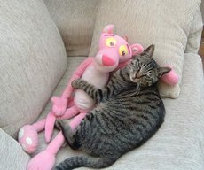 cat laying with pink panther