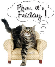 phew it's friday cat