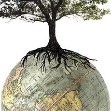 tree growing on the earth