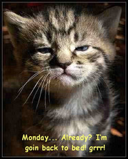 monday already cat