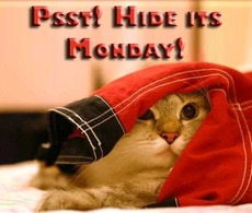 hide it's monday cat