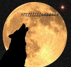 hello wolf howling at moon