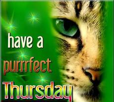 Have a purrrfect Thursday