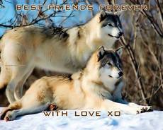 BEST FRIENDS FOREVER WITH LOVE XO