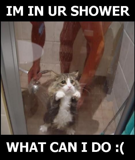 funny animals pictures with quotes. Funny dog quotes. backdraft
