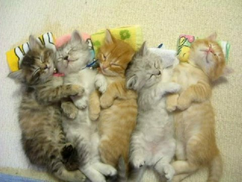puppies and kittens sleeping together. sleeping kittens