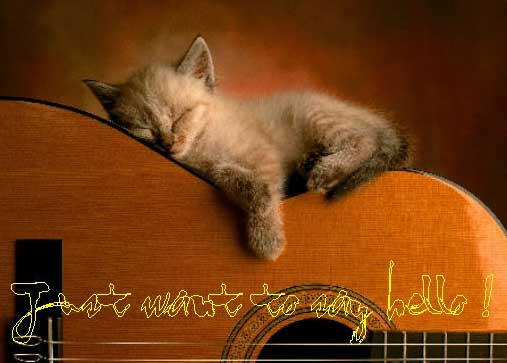 just want to say hello kitten sleeping on acoustic guitar