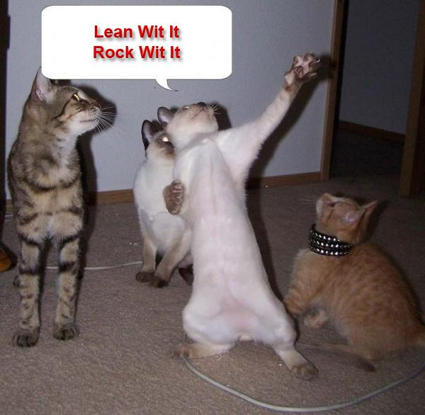 cats lean with it rock with it