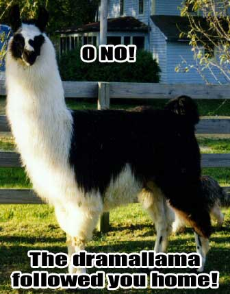 oh no the drama llama followed you home