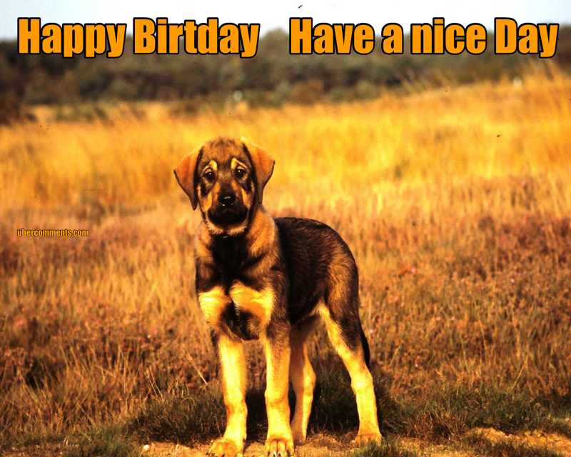 Happy Birtday    Have a nice Day
