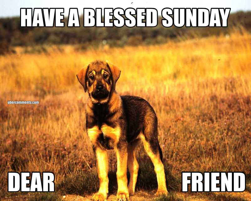 HAVE A BLESSED SUNDAY DEAR                              FRIEND