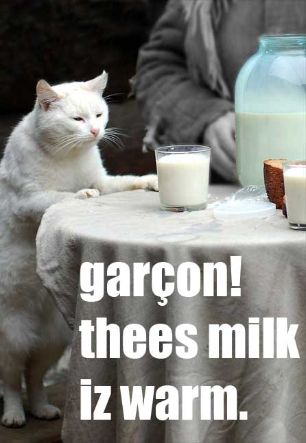 garcon this milk is warm