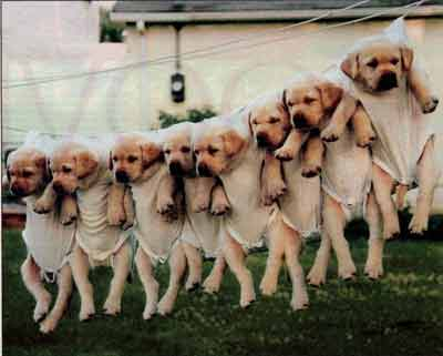 dogs hanging from clothes line