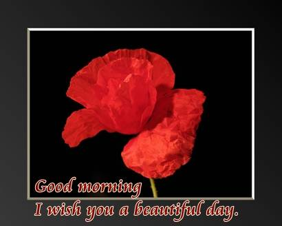 Good morning I wish you a beautiful day