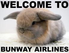 rabbit - welcome to bunway airlines