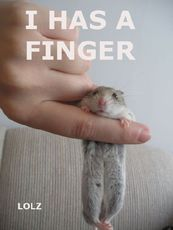 mouse on a finger