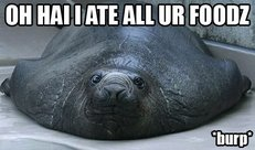 walrus ate all your food