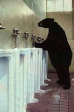 bear peeing in urinal