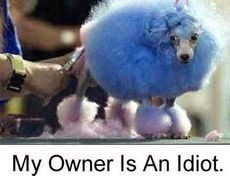 blue dog my owner is an idiot