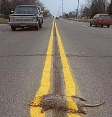 roadkill gets painted over