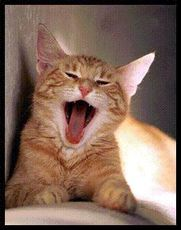 yawning cat