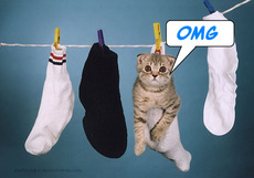 omg cat in a sock