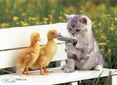 cat with gun holds up baby ducks