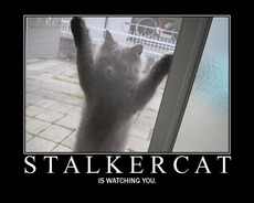 stalkercat is watching you