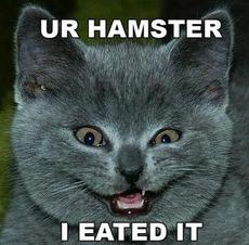 your hamster i ate it