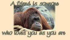 a friend is someone who loves you as you are