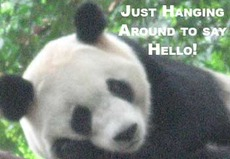 just hanging around to say hello panda bear