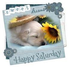 sweet happy saturday sweet dreams dog with flower