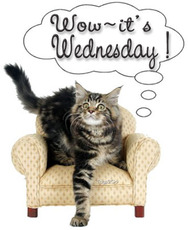 wow it's wednesday cat