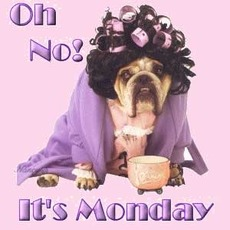 oh no its monday dog